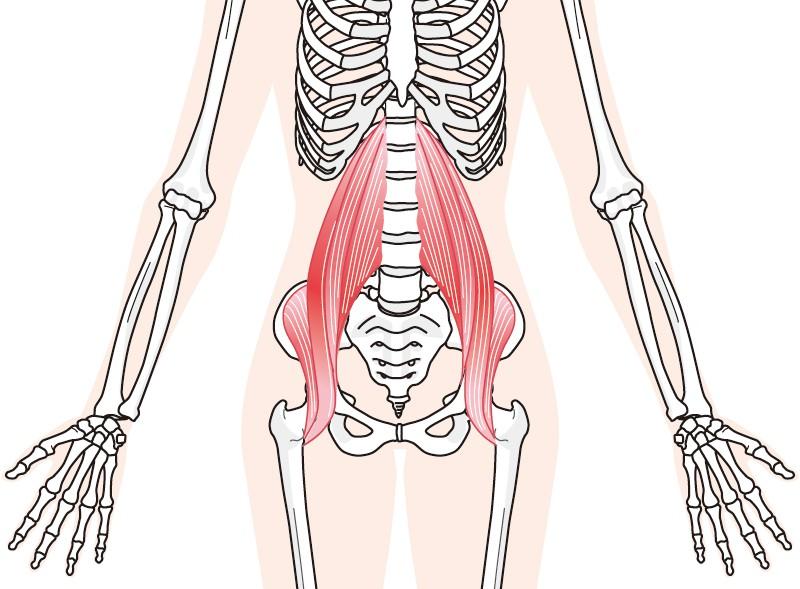 腸腰筋イラスト