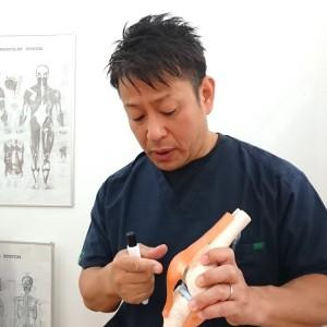 骨模型を使って説明